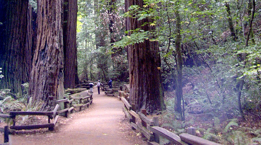 Muir Woods, Sausalito and City Tour