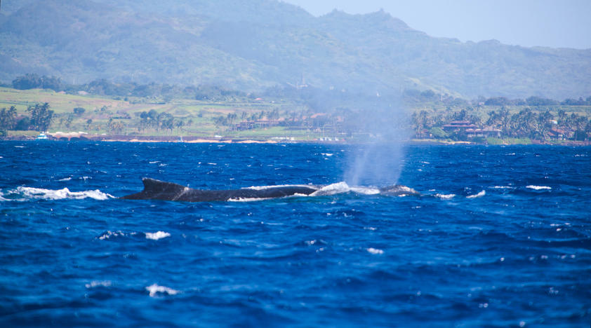 Whale Watching from Ka'anapali