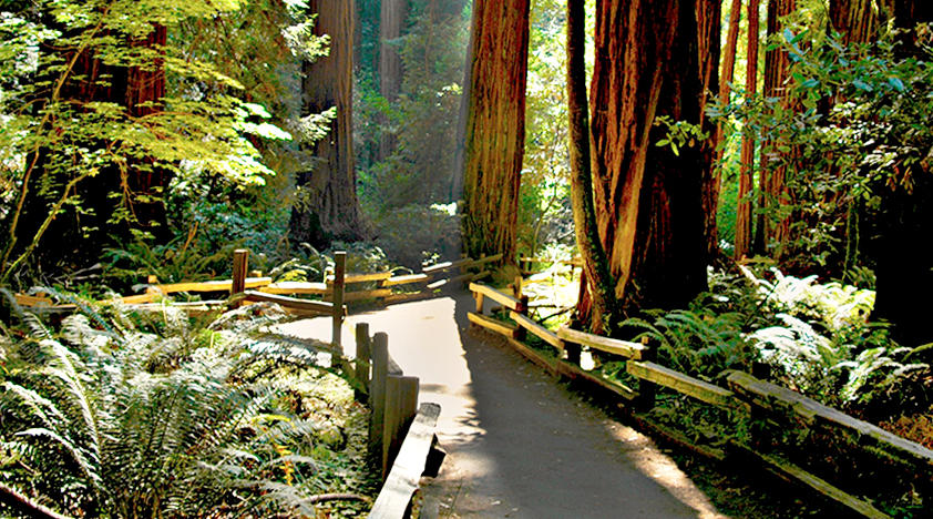Muir Woods And Wine Country Tour In San Francisco Peek