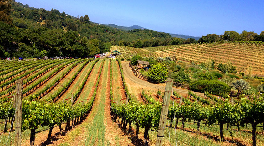 Wine Education Day Tour