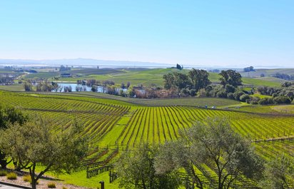 Vintage Wine Country Tours