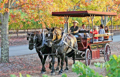 Wine Tasting and Carriage Ride