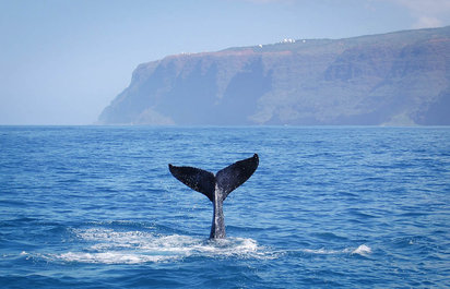 Snorkel and Whale Tours