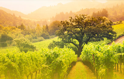 Napa Valley Food Tour