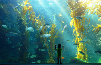 Birch Aquarium Admission